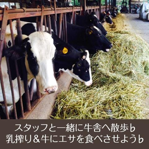 キャンプ ワークショップ 乳搾り&牛にエサを食べさせよう♭
